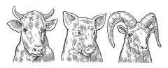 Farm animals icon set. Pig, cow and goat heads isolated on white background - stock illustration