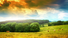 Summer landscape with grazing cows in green field. Timelapse - stock footage