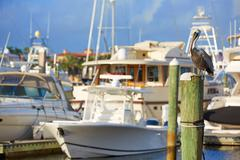 Fort Lauderdale Pelican bird in marina Florida Kuvituskuvat