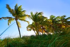 Key west florida Smathers beach palm trees US Stock Photos
