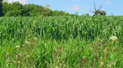 Historical windmill on summer field landscape near green trees. Stock Footage