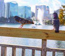 Orlando skyline fom lake Eola Florida US Kuvituskuvat