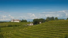 The vineyards on the hills Stock Footage