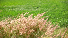 field of flowers grass - stock footage