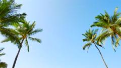 4K Palm Trees Flanking Frame, Blue Sky Stock Footage