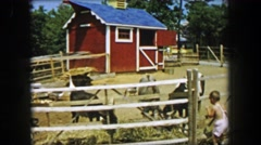 1955: Storyland theme park petting zoo boy visits farm animals eating. Stock Footage