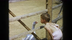 1955: Storyland theme park boy feeds goose kids petting zoo chicken wire fence. Stock Footage