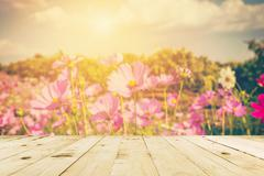 Abstract blurred cosmos field  flower and sunlight with vintage tone. Stock Photos