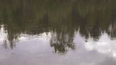 Calm river flows slowly, on its smooth surface reflected forest and sky Stock Footage