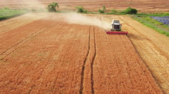 Aerial view on the combine working on the large wheat field Stock Footage