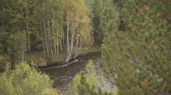 Through Pine and osier branches are visible fast river and birches on other side Stock Footage
