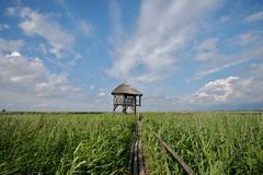 Pape, Birdwatching tower - stock photo