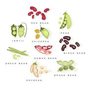 Bean Cultures With Names Set - stock illustration