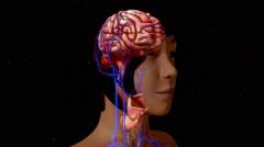 Pituitary gland anatomy Stock Footage