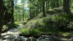 Mountain woods forest landscape with river at Alpe Devero Stock Footage