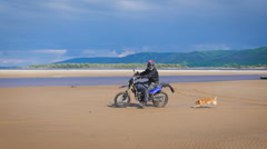 Motorcyclist rides on the sandy beach, running behind him cute and funny dog Arkistovideo