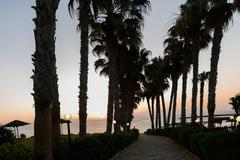 Palm trees at sun rise, in protaras beach, cyprus island - stock photo