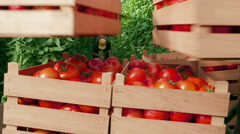 Farmers taking boxes with ripe tomatoes, close up, picker working in greenhouse. Stock Footage