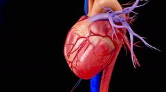 HUMAN HEART 3D animation - stock footage