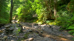 4K Slow Stream trickles through Mossy Green Pacific Northwest Forest Stock Footage
