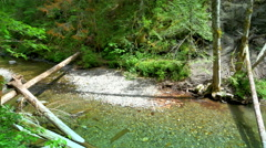 4K Shallow Stream with Pond Stone in Mountain Forest Foliage Stock Footage