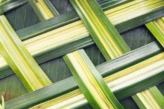 green palm tree leaf grid texture - stock photo