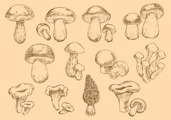 Fresh edible mushrooms engraving sketch symbols - stock illustration