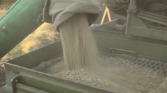 Unloading grain into hopper car for storage and supply of seeds closeup - stock footage