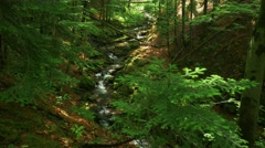 Little mountain river in the forest. Stock Footage
