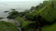 Mossy rocks in the sea coast Stock Footage