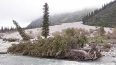River and Fallen Trees in Ala Archa Park, Kyrgyzstan - stock footage