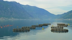 Fish farm for salmon growing in open sea water Stock Footage