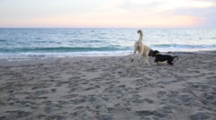 Two dogs playing on the beach Stock Footage