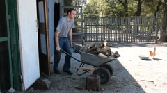 The young man takes a wheelbarrow of firewood from the farmyard. Stock Footage