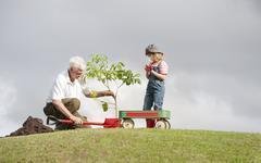 planting park bonding child grandfather family togetherness eco - stock photo