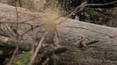 chop wood Chainsaw - stock footage