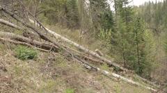 Chop wood Chainsaw Stock Footage