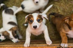 Little puppies in the shelter Stock Photos