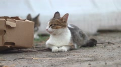Feral cats lying down on ground. Portrait of the cat resting - stock footage