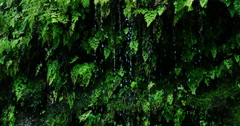 Rain drops falling off of lush green ferns in the jungle - stock footage
