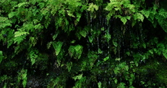 Rain drops falling off of lush green ferns in the jungle Stock Footage