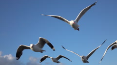 SLOW MOTION:A group of seagulls flying in the blue sky near the coastline Stock Footage
