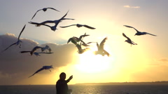 SLOW MOTION: Throwing pieces of food to cute seagulls at stunning sunset Stock Footage