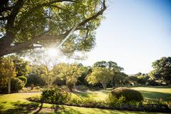 Picture of park with trees without people during a sunny day - stock photo