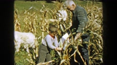 1957: Children and grandpa picking corn in farm fields harvesting family Stock Footage