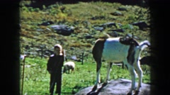 1957: Boy teasing farm goat pulling leash rope tied to tormented animal. Stock Footage