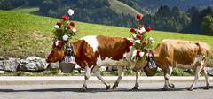 Transhumance event in Charmey Stock Photos