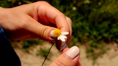 Tearing daisy petals Stock Footage