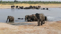Herd of African elephants at waterhole Stock Footage