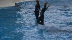 Dolphin carries tamer over the water in the pool Stock Footage